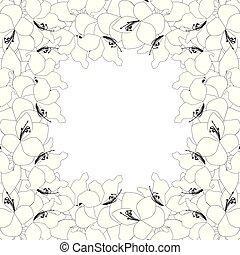 amaryllis, border2, schets