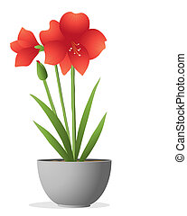 amaryllis - an illustration of a beautiful bright red...