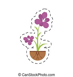 amaryllis flower decoration growing vector illustration eps...