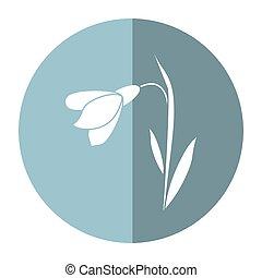 amaryllis flower decorative shadow