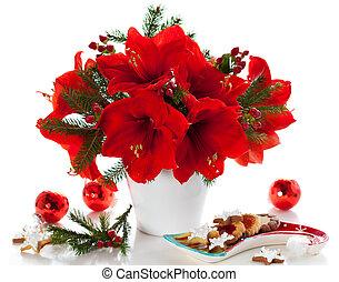 amaryllis, noël, arrangement