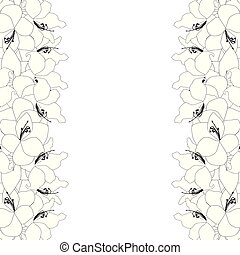 Amaryllis Outline Border - Hippeastrum. Christmas Flower....