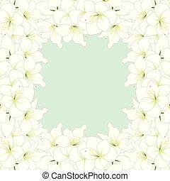 amaryllis, witte , border2