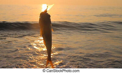 Amateur  fishing in India sunset. Parvati fish (gafftopsail catfish)
