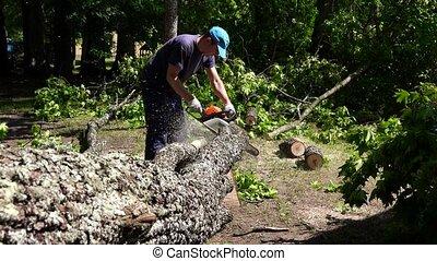 Amateur gardener man sawing felled tree trunk in garden...