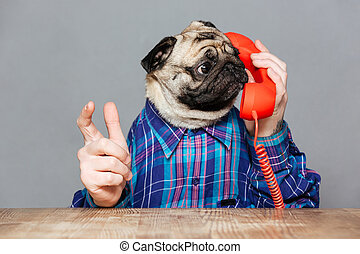 Amazed man with pug dog head talking on telephone