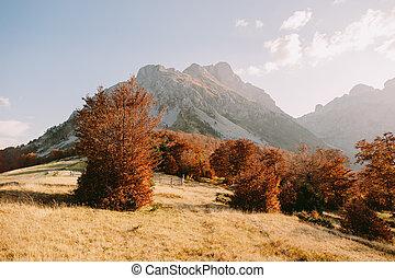 amazing autumn mountain scenery