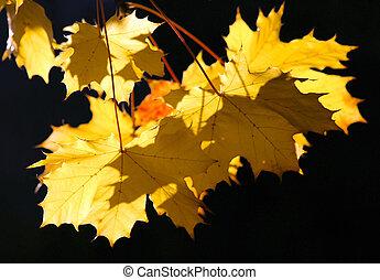 Amazing autumnal arboreal