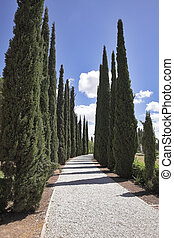 Amazing avenue of cypresses in park in Akko