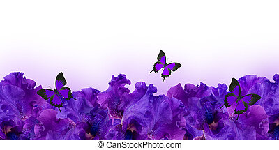 Amazing background fresh iris flowers with water drops and butterflies