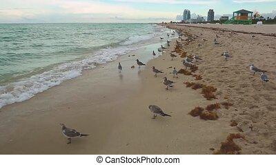 Amazing beauty Atlantic ocean horizon and blue sky. Gulls on Miami South Beach. Florida.