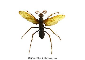 beetle isolated on white background - amazing beetle ...