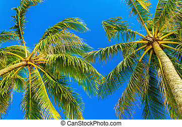 Amazing coconut palm trees