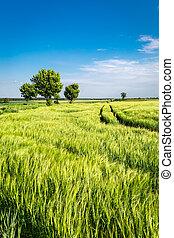 Amazing ears of grain on green field in summer