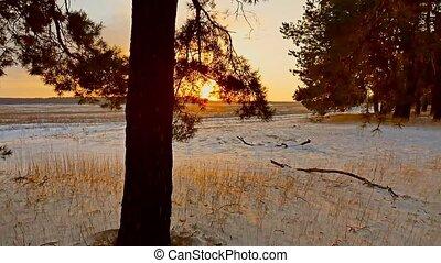 Amazing evening motion winter landscape. Christmas tree beautiful winter forest snow sun a glare sunset