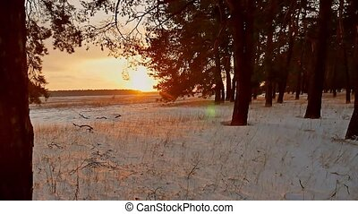 Amazing evening motion winter landscape. Christmas tree beautiful winter sunset forest snow sun a glare