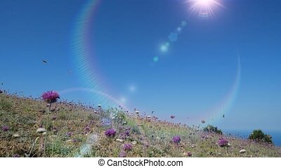 Amazing flights of colorful butterflies over grass and lilac flowers on hot spring day, slow motion. Beautiful butterflies fly chaotically over the nature. Wonderful insects on the background of sun.