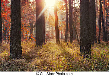 Amazing golden autumn in the forest.