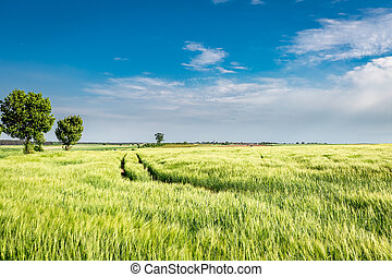 Amazing green field with country road in sunny day