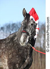 Amazing horse with christmas hat and gifts
