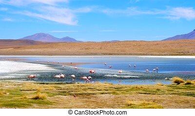 Amazing Laguna Colorada scenery with flock of beautiful...