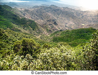 Amazing landscape of jungle forest growing on the high mountains at bright sunny day