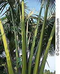 amazing ornamental plants in the garden