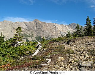 Amazing panorama view on Parker Ridge Trail in the Canadian Rockies