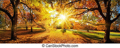 Amazing panoramic autumn scenery in a park