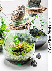 Amazing rain forest in a jar as new life concept
