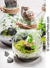 Amazing rain forest in a jar on white table