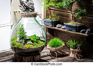 Amazing rain forest in a jar, save the earth idea