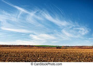 Amazing rural scene on autumn corn field