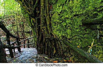 Amazing stone staircase, fence, tree