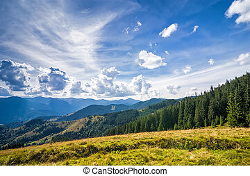 Amazing sunny landscape with pine tree highland forest at Carpat