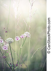 Amazing sunrise at summer meadow with wildflowers. Abstract flor