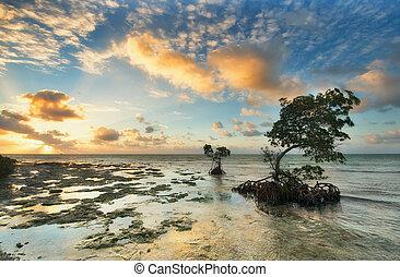 Amazing sunrise in Florida Island. - One of the reef Florida...
