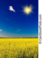 Small house among golden rapeseed field and fun sun.