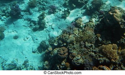 Amazing underwater 4k video of underwater life around coral...