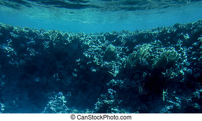 Amazing underwater image of Red sea bottom. Colorful coral fishes and growing reef under the water surface