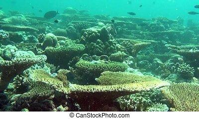Amazing underwater life of marine life in sea of Maldives.