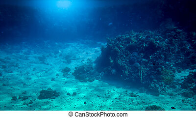 Amazing underwater shot of sandy sea bottom with growing colorful coral reefs and swimming fishes