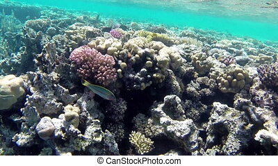 Amazing underwater world with corals and fishes