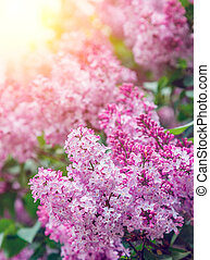 Amazing view close-up beautiful lilac flowers