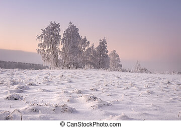 Amazing winter landscape in the morning. Frosty and snowy trees is on meadow covered by snow. Yellow sunlight in winter scene. Christmas nature background