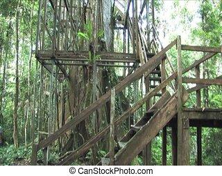 Amazon 200 foot treehouse