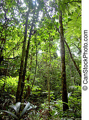 Amazon jungle vegetation