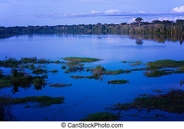 Amazon Rain Forest Blue Hour