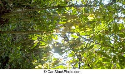 Amazon Rainforest Rotating Shot In Ecuador - Rotating Shot ...