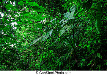 Amazon Rainforest, South America - Amazon Rainforest,...